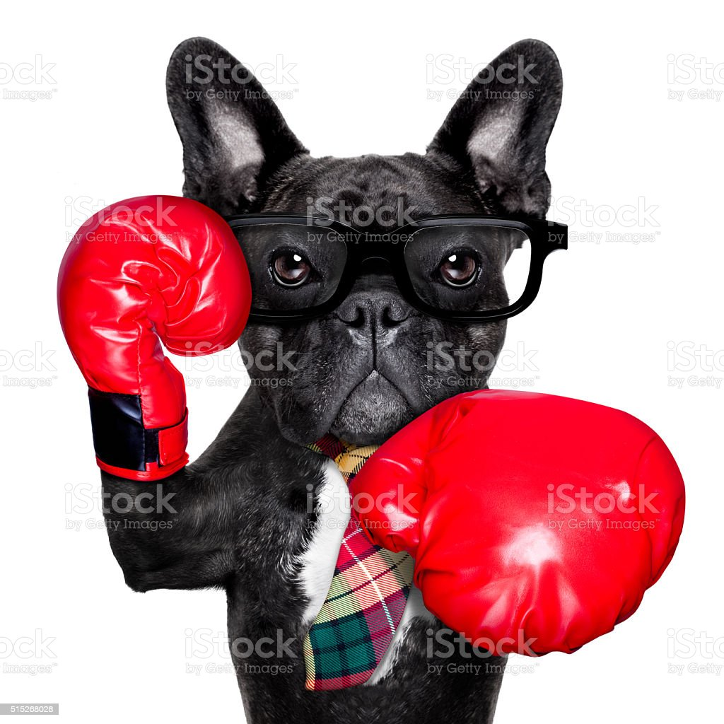 Boxen Hund - Lizenzfrei Aggression Stock-Foto