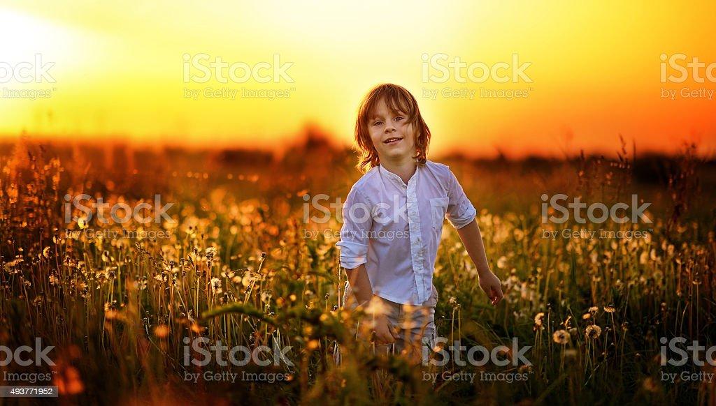 Boy among dandelions at sunset stock photo