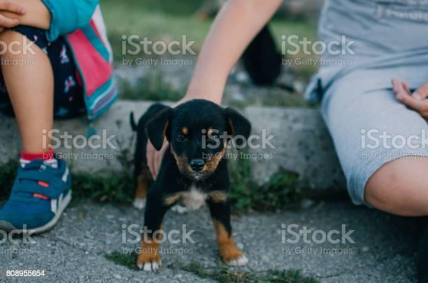Boy and a girl play with a little dog picture id808955654?b=1&k=6&m=808955654&s=612x612&h=wbqy6ob 9mc fqd1oennjmjnypxmwmeh67cfttgjdfg=