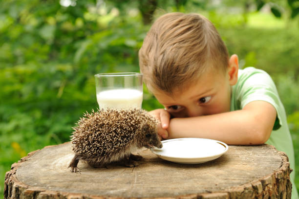 Boy and a hedgehog in the nature picture id1141773154?b=1&k=6&m=1141773154&s=612x612&w=0&h=6nwgkofa6dxjatqh0ii9uk4dzyf4kcc8uohi2eiwnd4=