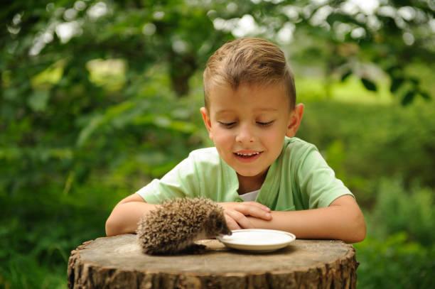 Un garçon et un hérisson dans la nature. - Photo