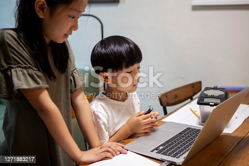 A boy and an older sister looking at a computer screen while holding a stag beetle in their hands