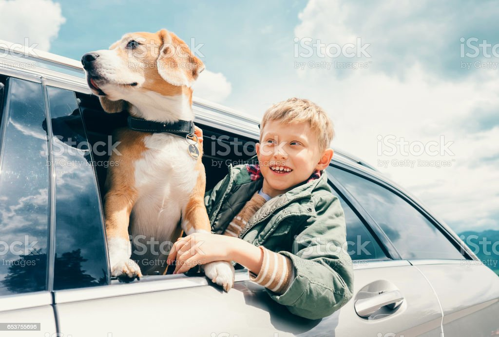 Boy and dog look out from car window stock photo