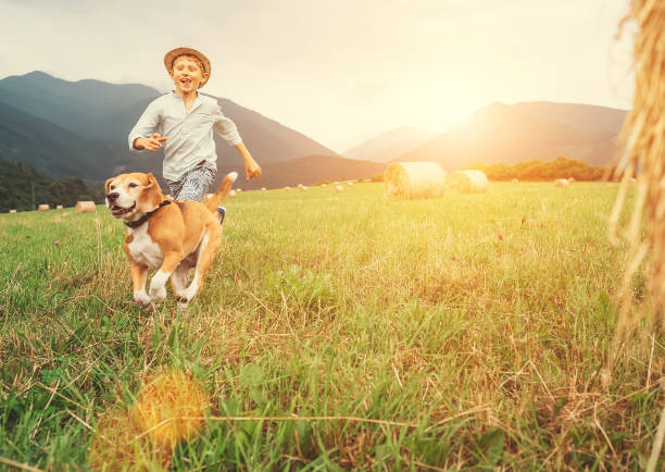 Boy and dog run together on the field with haystacks stock photo