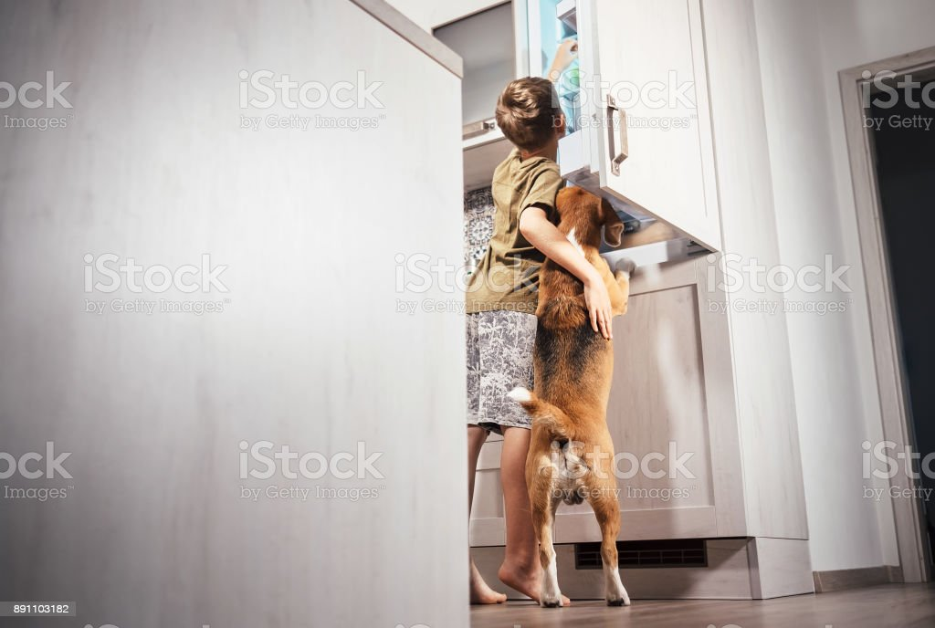 Boy and dog try to find somthing delicious in rifregerator stock photo