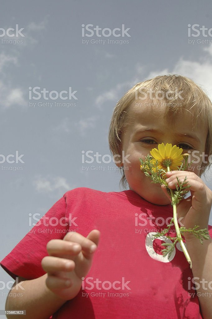 boy and flower stock photo