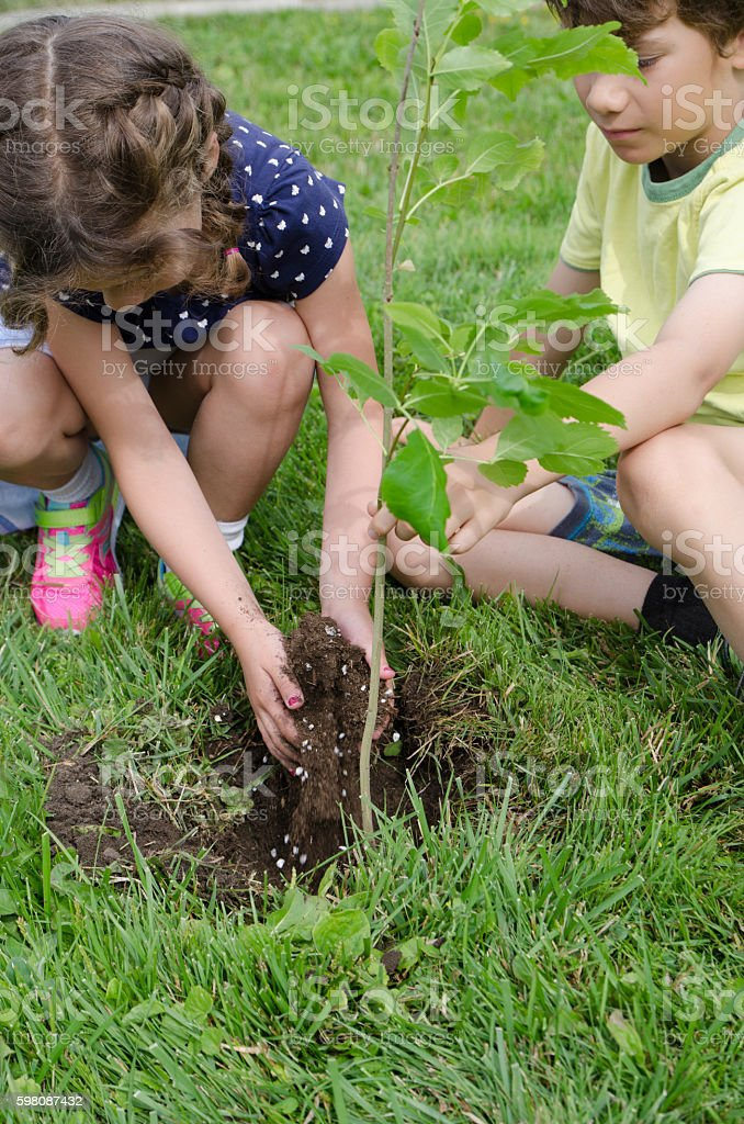 Boy and girl planting a tree on front yard stock photo