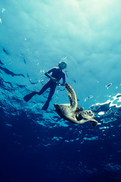 Boy and Green Sea Turtle Hawaii turtle encounter snorkel stock pictures, royalty-free photos & images