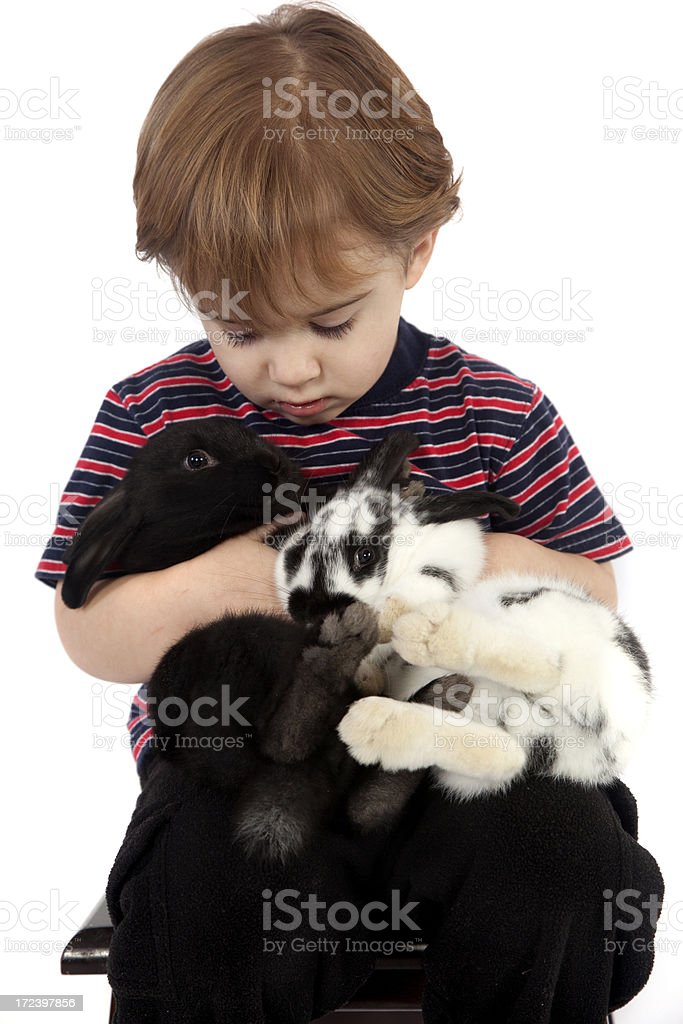 Boy and his bunnies. royalty-free stock photo