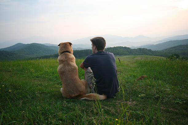 boy and his dog look at the view