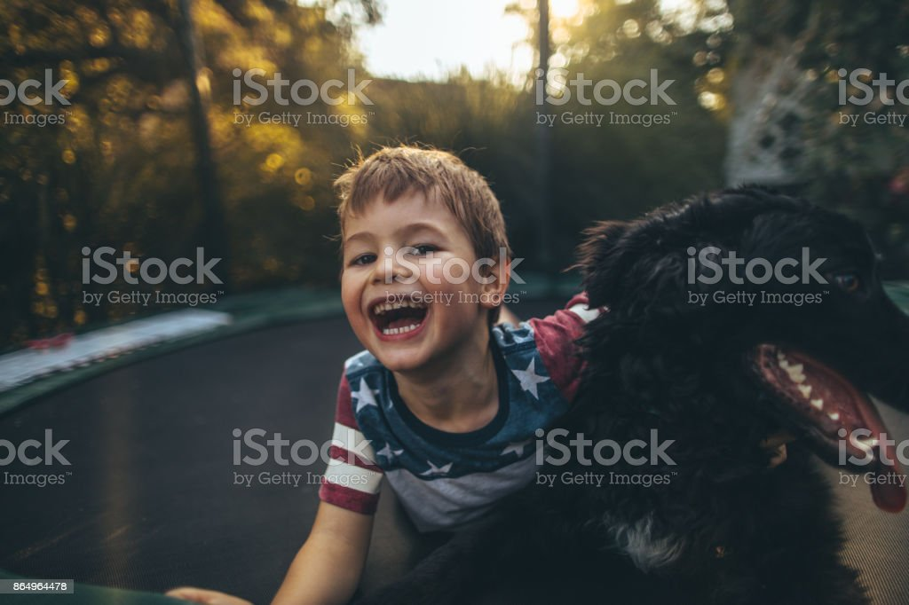 Boy and his dog on a trampoline stock photo