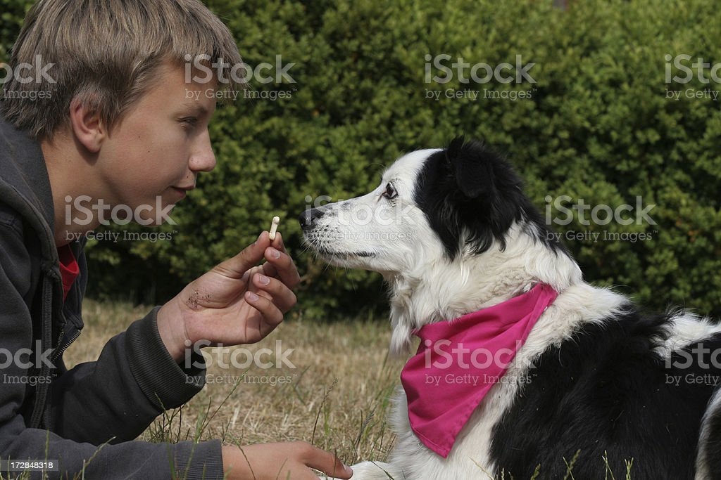 Boy and his dog. royalty-free stock photo