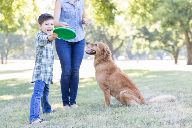 A boy and his dog play in the park together Elementary age boy prepares to throw plastic disc for his attentive dog to catch. The boy's mom is playing as well. plastic disc stock pictures, royalty-free photos & images