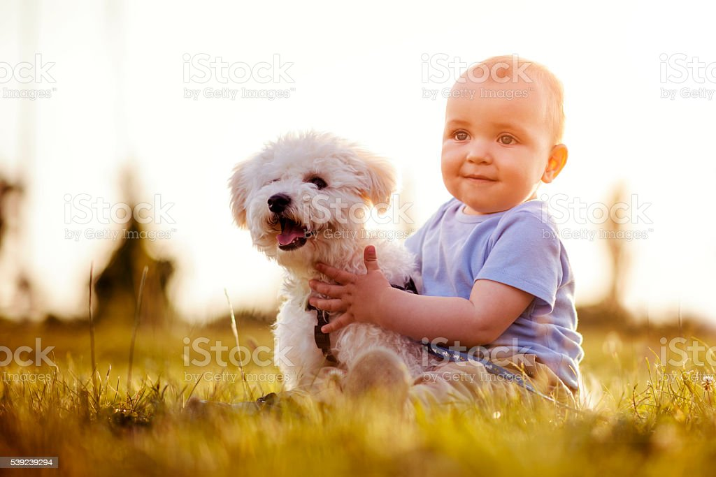 Boy and puppy royalty-free stock photo