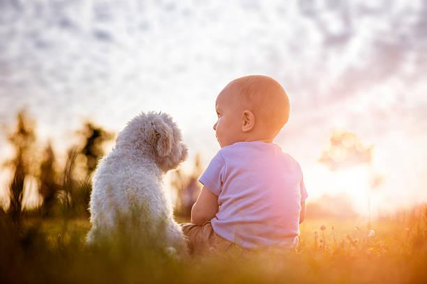 Boy and puppy picture id539819256?b=1&k=6&m=539819256&s=612x612&w=0&h=y85pyiwabag8nzlrlchl47ihvvd29dfe4cc9 h07t4k=