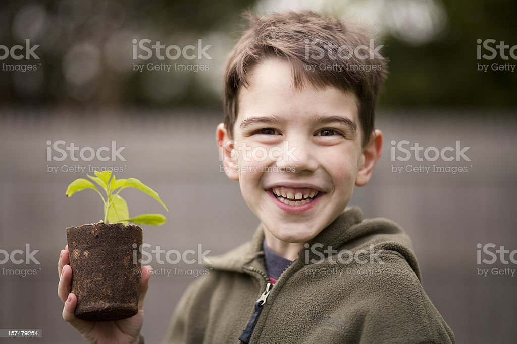 Boy and seedling stock photo