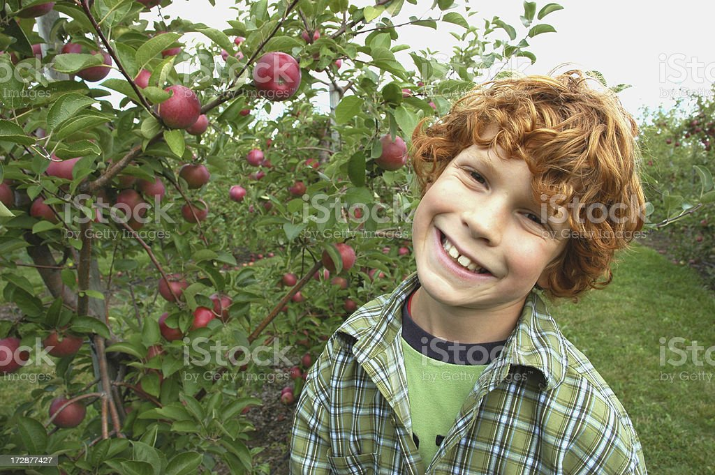 Boy at the Apple Orchard royalty-free stock photo