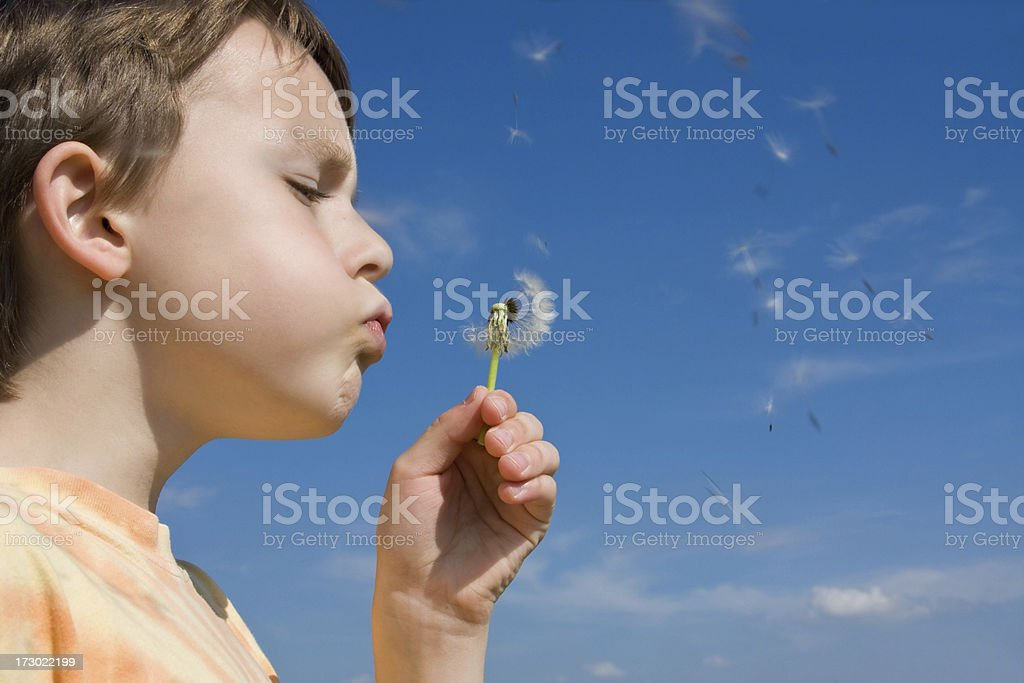 boy blowing a dandelion royalty-free stock photo