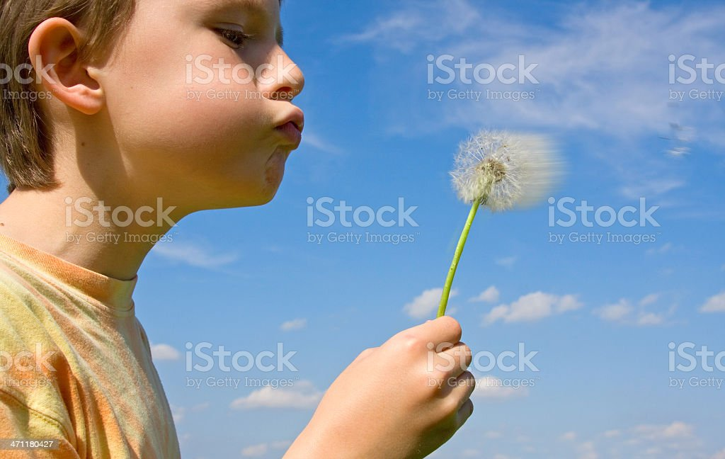boy blowing a dandelion royalty-free stock photo