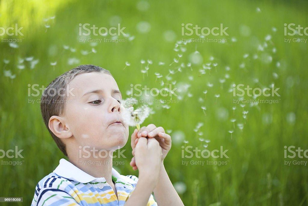 Boy blowing dandelion royalty-free stock photo