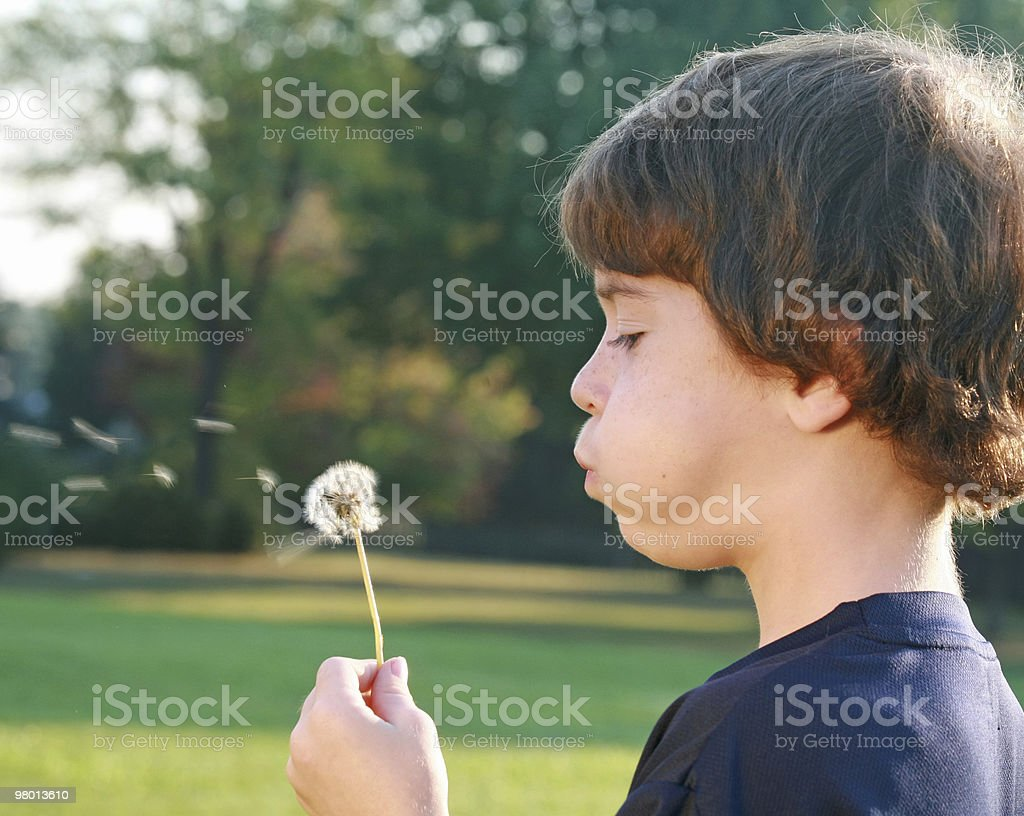 Boy Blowing Seeds royalty-free stock photo