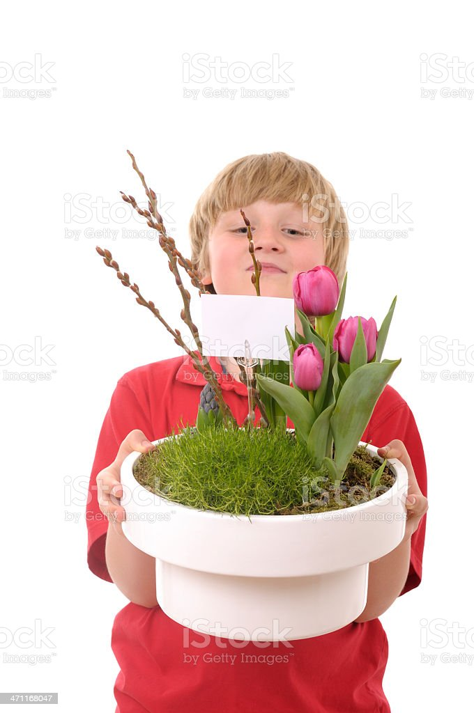 Boy carrying large planter with spring flowers royalty-free stock photo
