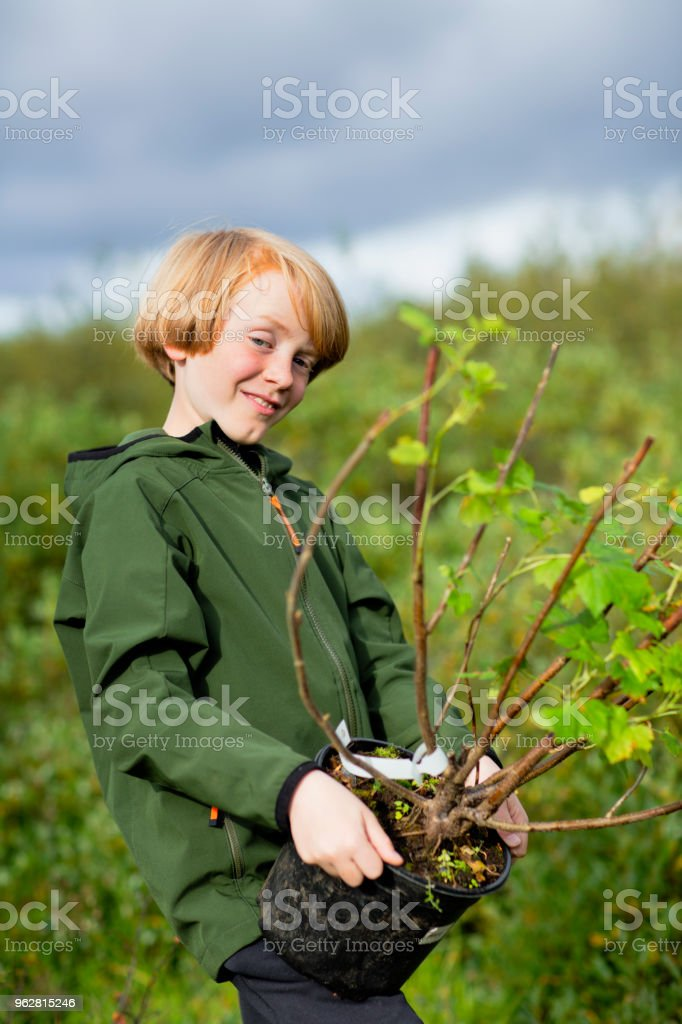 Menino carregando a planta em vaso enquanto jardinagem em campo - Foto de stock de 10-11 Anos royalty-free