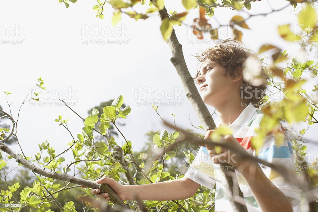 Boy climbing in tree royalty-free stock photo