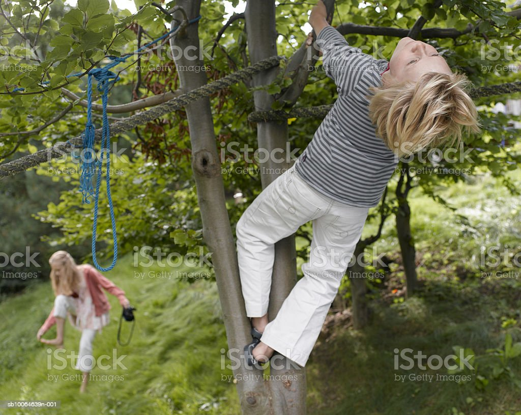 Boy (10-11) climbing on tree, girl in background royalty-free stock photo