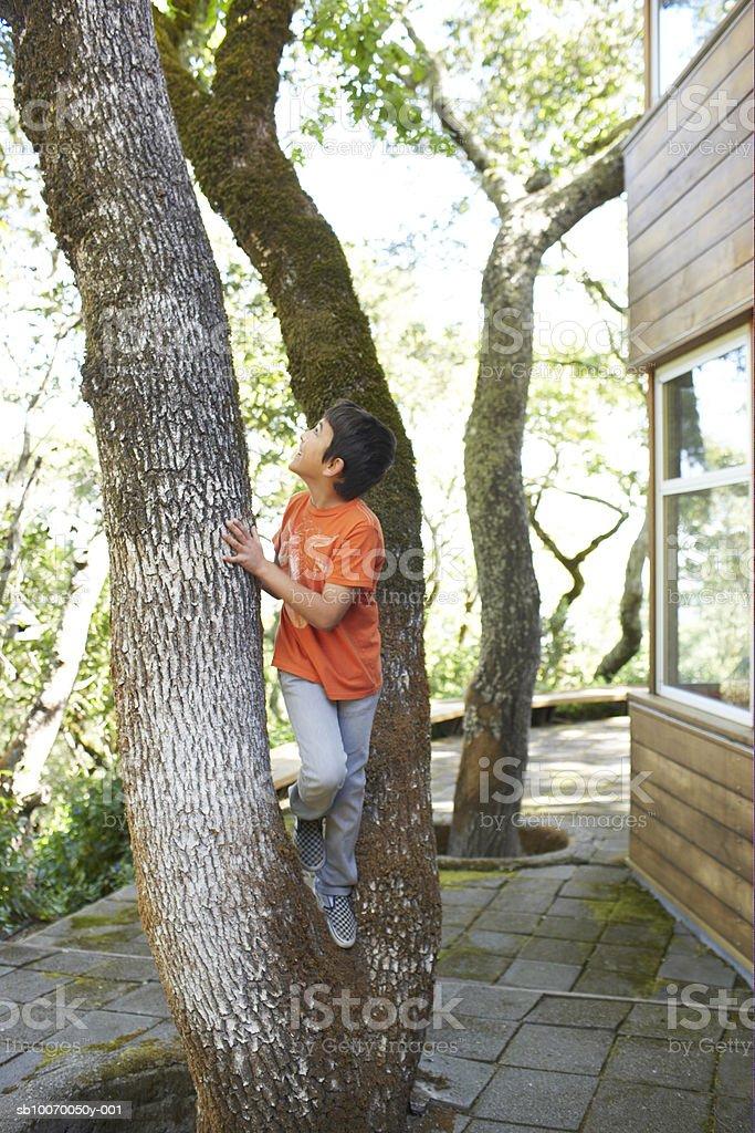 Boy (10 A) para escalar el árbol foto de stock libre de derechos