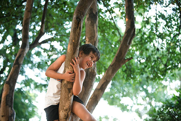 Boy climbing tree Boy climbing tree sergionicr stock pictures, royalty-free photos & images