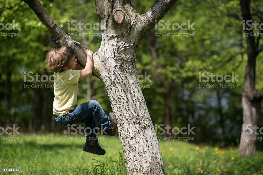Boy escalada árbol - foto de stock