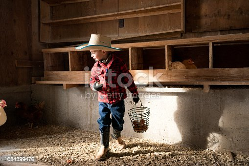 Adorable young 4 year old Caucasian boy wearing a cowboy hat, boots and red plaid shirt collects chicken eggs on the family farm, Montana, USA