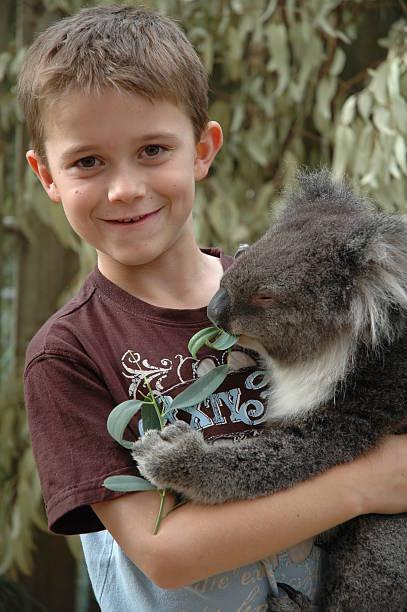 Boy cuddling Koala stock photo