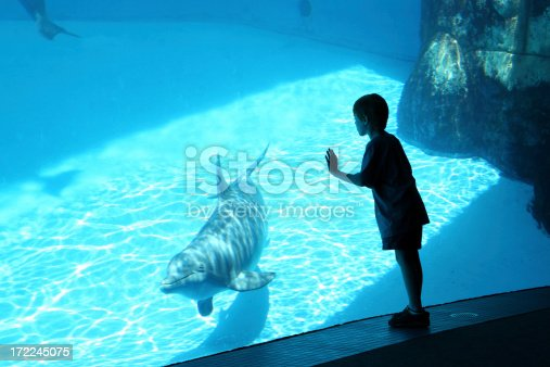 Young boy viewing a swimming dolphin through a large glass window.