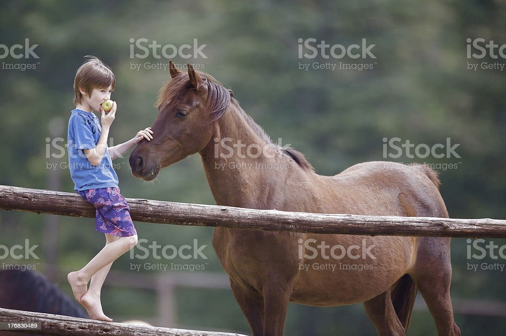 Boy Eating an Apple and a Horse stock photo