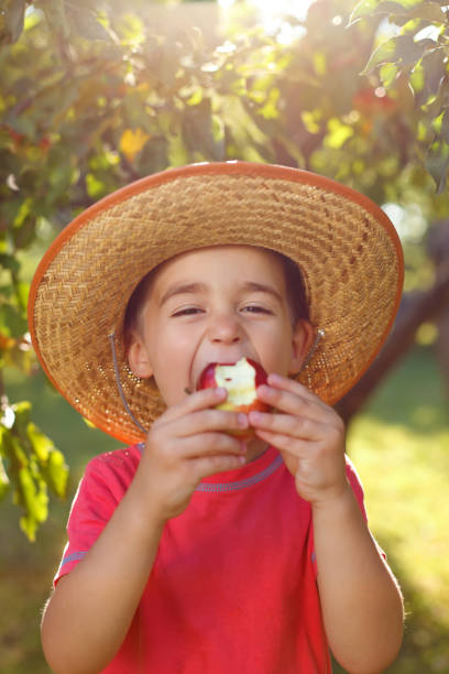 Boy eating apple in orchard stock photo
