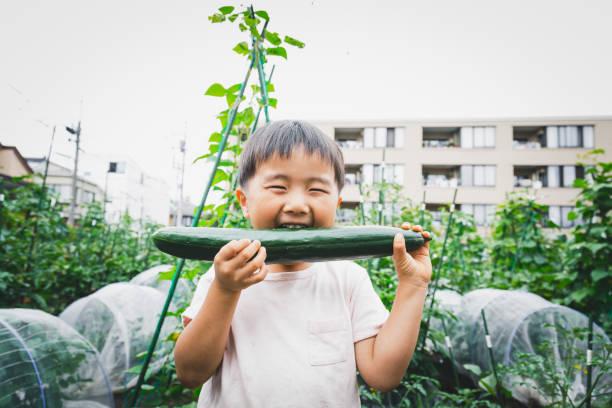農場でキュウリを食べる少年 - sustainability ストックフォトと画像
