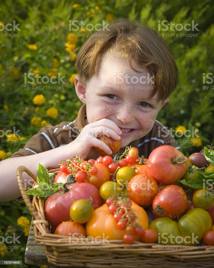 Boy Eating Healthy Vegetables, Child Gardener & Homegrown Heirloom Tomatoes royalty-free stock photo