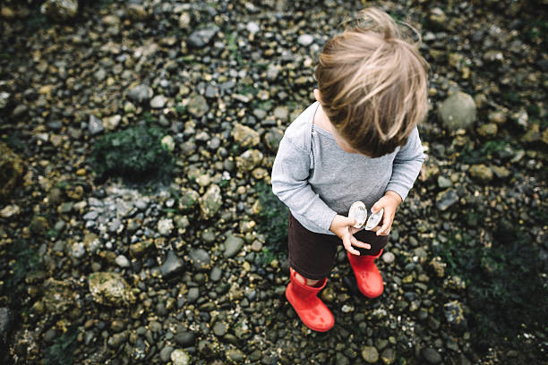 Boy Exploring Rocky Beach A toddler aged boy has fun discovering the wonders of a Pacific Northwest beach on the Puget Sound in Washington state, holding a white seashell.  The beach is covered with seaweed, rocks, and shells, contrasted by the boys red rubber boots. puget sound stock pictures, royalty-free photos & images