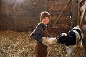 Young boy bottles feeds a calf in a  barn.