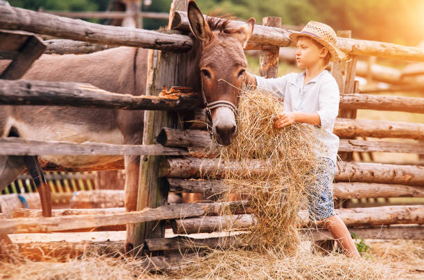 90 Lazy Farmer Stock Photos Pictures Royalty Free Images Istock