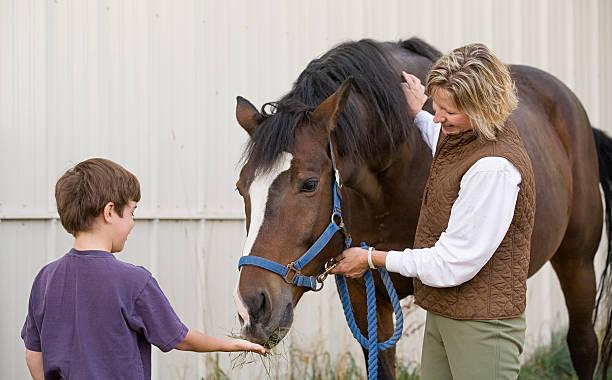 Boy Feeding Horse stock photo