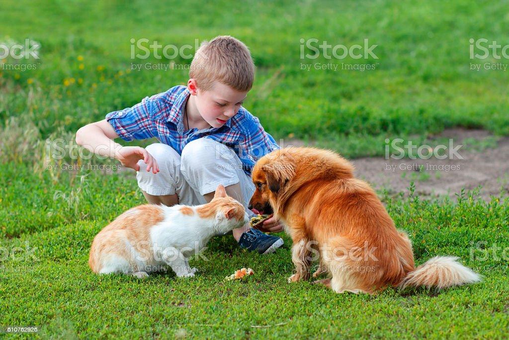 boy  feeding the cat and dog in the yard – Foto