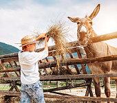 Boy feeds a donkey on the farm