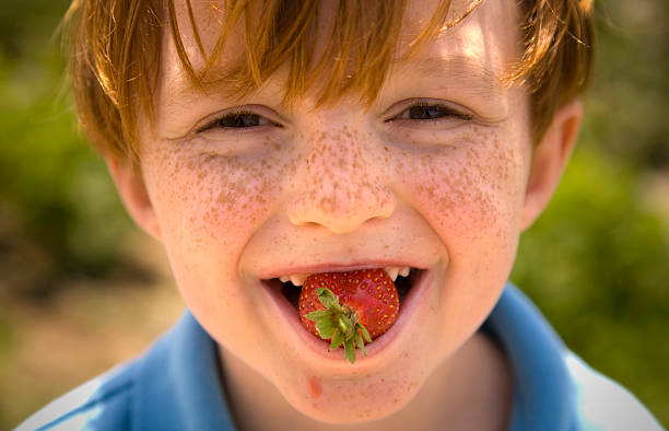 Boy Freckle Face Eating Strawberry Fruit, Child Tasting Healthy Food  strawberry field stock pictures, royalty-free photos & images