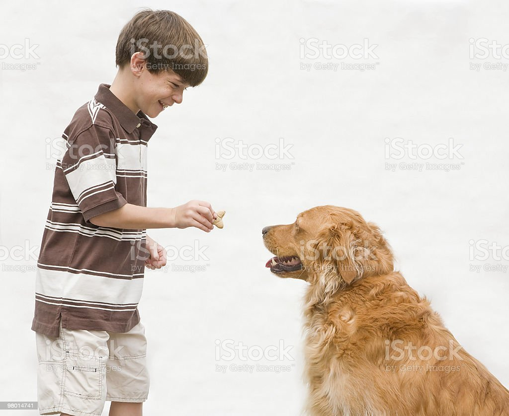 Boy Giving Dog a Reward royalty-free stock photo