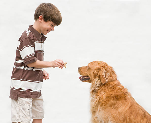 Boy giving dog a reward picture id98014741?b=1&k=6&m=98014741&s=612x612&w=0&h=sbu dxvmhkbl7  rp8lhzzg3zwvxuf4 200wdja4xl4=
