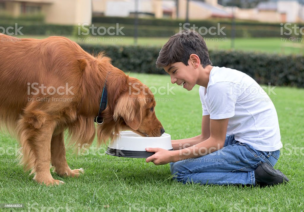 Boy giving water to his dog stock photo