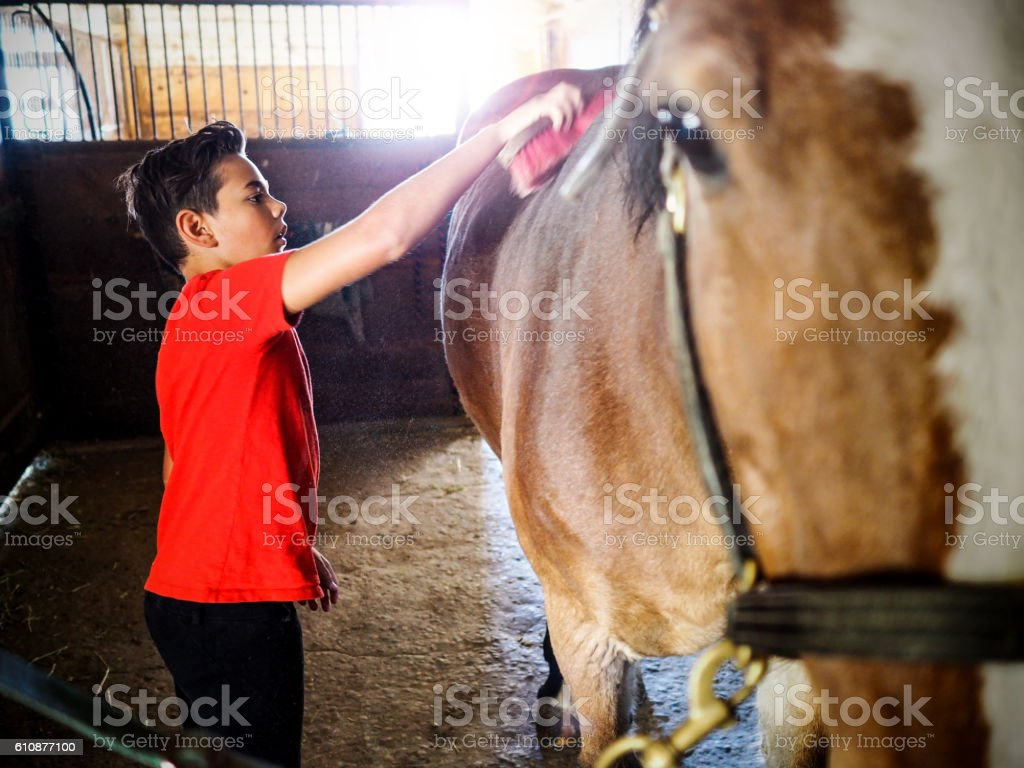 Boy grooming his horse in the stables. stock photo